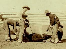 Cowboys branding cattle